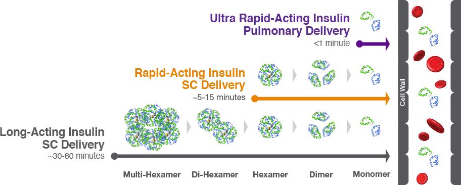 ultra-rapid-insulin